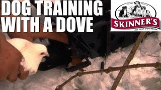 Gundog Training Tips - How To Use A Dove Launcher