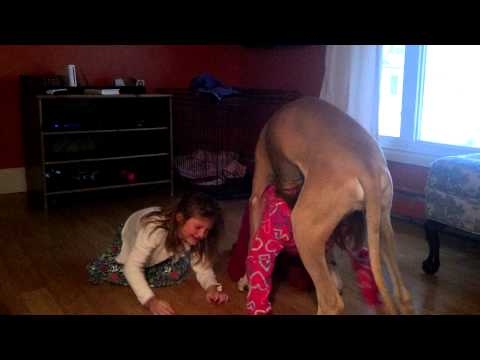 Thumbnail: 6 month old great Dane playing with girls