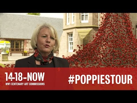 Poppies: Weeping Window in Perth