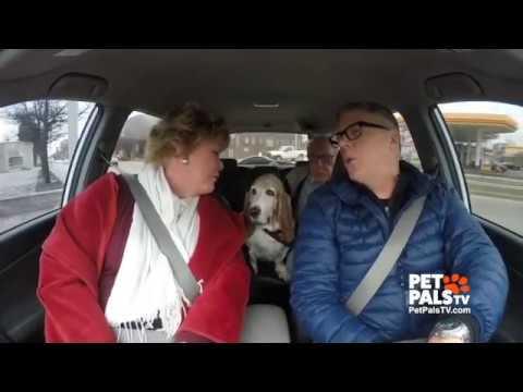 Sneak peek: Canine Karaoke