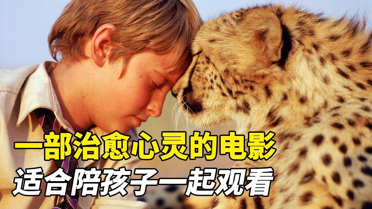 小男孩與獵豹的故事,一部治愈心靈的電影,適合陪孩子一起觀看!