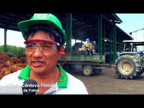 PASANTÍA INTERNACIONAL  - PROYECTO PALMA  (COLOMBIA)