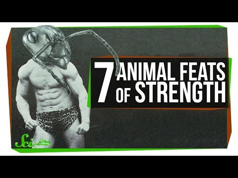 7 Ridiculous Feats of Strength in the Animal Kingdom
