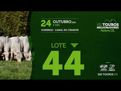 LOTE 44 - LEILÃO VIRTUAL DE TOUROS MELHORADORES  - NELORE OL - PO 2021