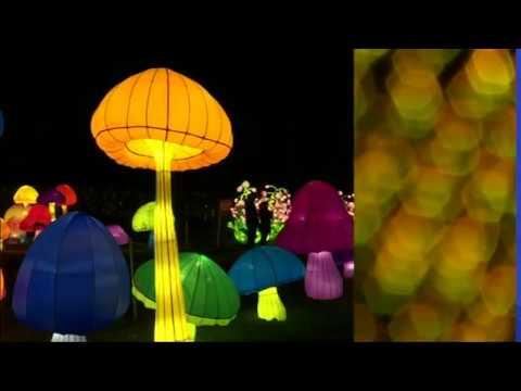 صور مهرجان المصابيح الصينية في نيويورك   #بي_بي_سي_ترندينغ  - نشر قبل 2 ساعة