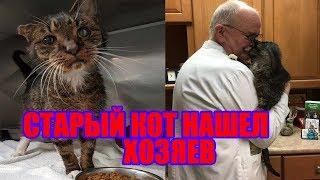 Кот из приюта нашёл хозяев| Старый кот нашел хозяев| История старого кота Барнаби