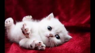 моё любимое животное кошка,на канале Khaldeeva.
