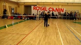 Всероссийская выставка собак Саранск 26 февраля 2012