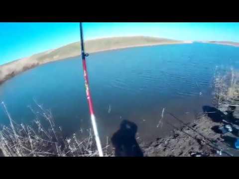 ловля судака 2018 перед нерестовым запретом - YouTube