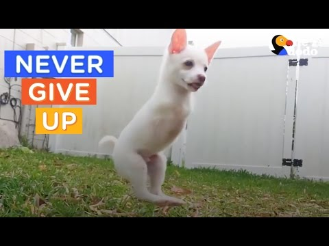 12 Dogs That Never Give Up | Best Dog Compilation | The Dodo Daily