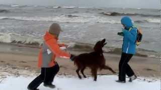 Dzieci i pies na zimowym spacerze