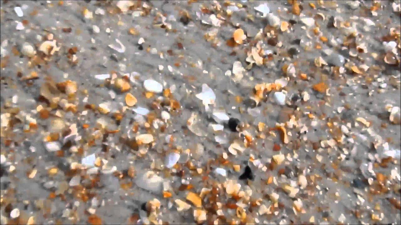 Finding Fossil Shark Teeth On Guana Reserve Beach Florida