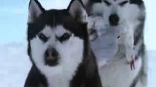 Трогательный клип про собак