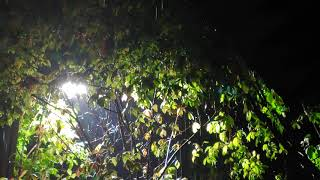 비 오는 날 가로등 밑…