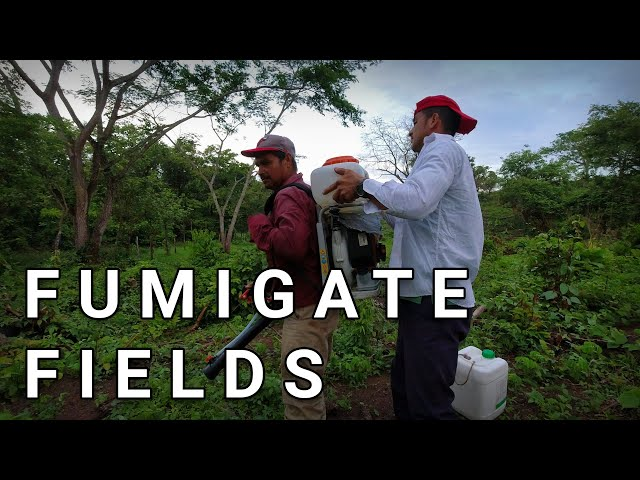 How To Fumigate Fields With Herbicide (glyphosate + 2-4-D)