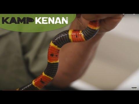 Coral Snake Venom! : Kamp Kenan S2 Episode 5| Coral Snake