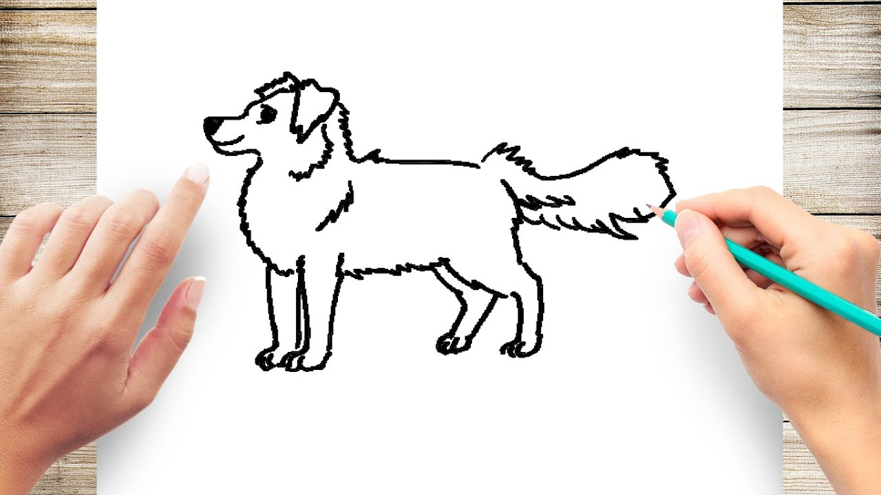 How To Draw A Dog Step By Step For Beginners Slow And Easy Youtube