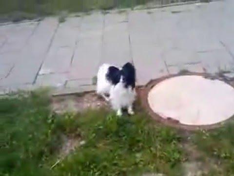 A little prank on my dog