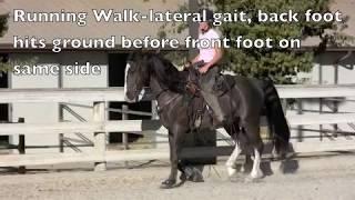 Gaited Horses and Their Gaits