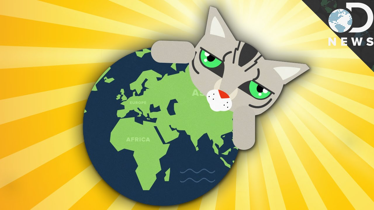 Animated map of how cats spread across the world images