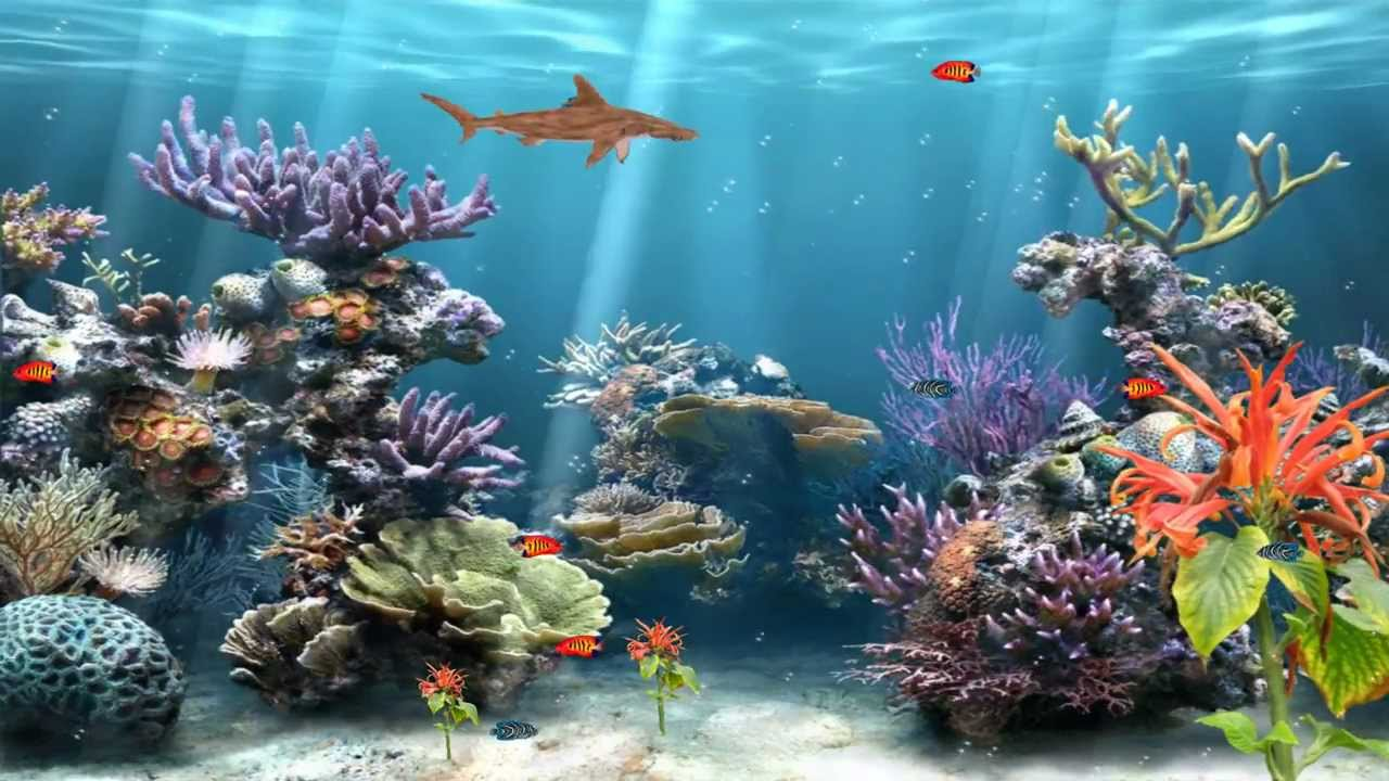 Coral reef aquarium animated wallpaper http www for Moving fish wallpaper