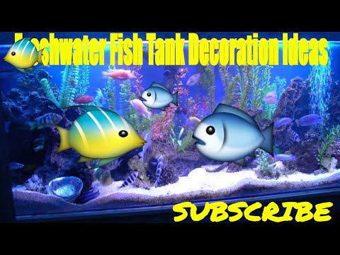 freshwater fish tank decoration ideas - Freshwater Aquarium Design Ideas