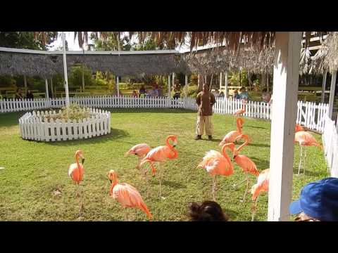 FLAMINGOS, ARDASTA Gardens, Zoo, & Conservation Center, Nassau, Bahamas  December 2016
