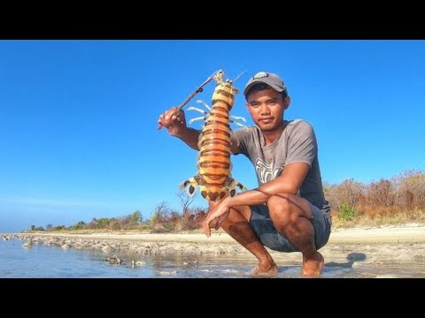Gigantic Mantis Shrimp of madura Remote Island Catch Them With Simple bamboo trap
