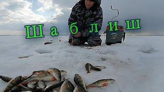 ШАБЛИШ Трудовая получилась рыбалка Кто ищет рыбу тот найдет