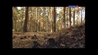 Искатели. Священная тайна Сибири (2013) Документальный -HD-NET-