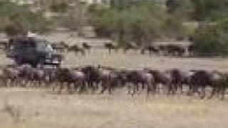 Safari Masai Mara (Kenya) 2006