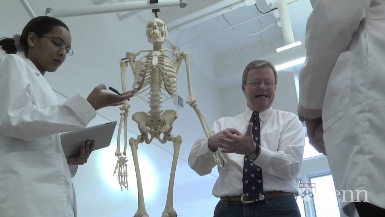 Going Out on a Limb: Anatomy of the Upper Limb   PennX on edX ...