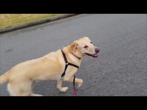 Best Way To Exercise Your Dog And Yourself Mp3