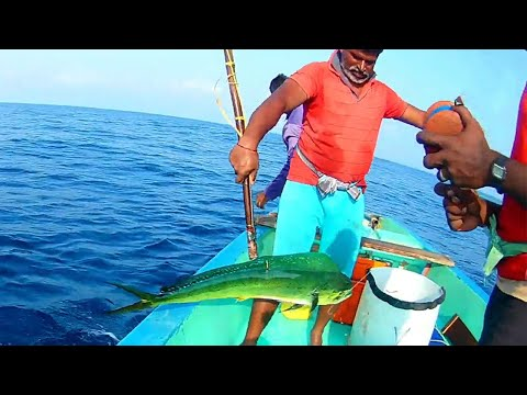 DOLPHIN FISHING (Mahi-Mahi) & King Mackerel Caught In Handline Fishing | The Fisherman