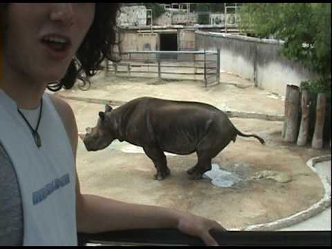 rhino poop youtube