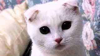 Самые удивительные кошки в мире