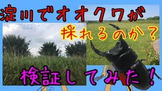 次のオススメ動画 裏山でまさかのオオクワガタ!? https://youtu.be/Ds...
