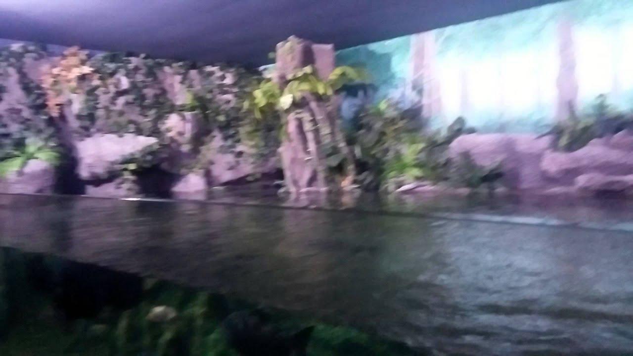 Eskisehir yer Alti akvaryum Gezisi - YouTube