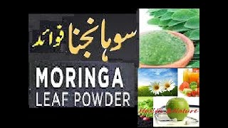 Moringa / Sohanjna Health Benefits & Leaf Powder making Urdu / Hindi