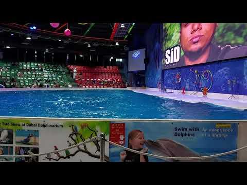 Part 1 | Dubai Dolphinarium – Dolphin and Seal Show