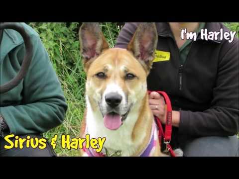 Dogs Trust Leeds - Homeless Hounds