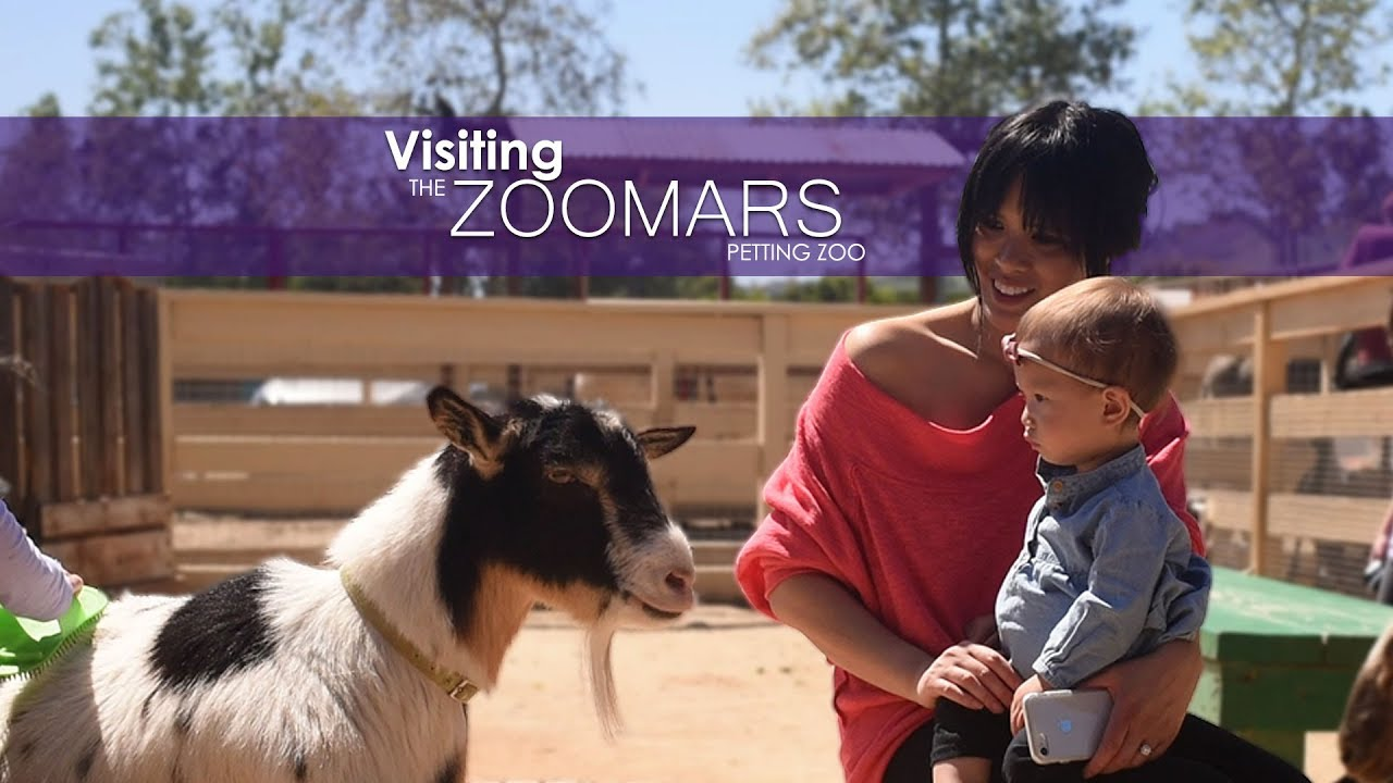 Visiting The Zoomars Petting Zoo In San Juan Capistrano Things To