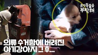 의류수거함에 버려진 강아지 두 달이 지난 지금, 어떻게…