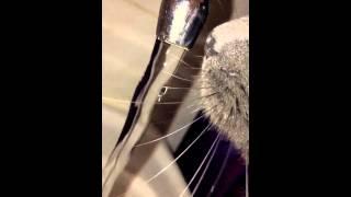 Кот пьет, замедленная съемка
