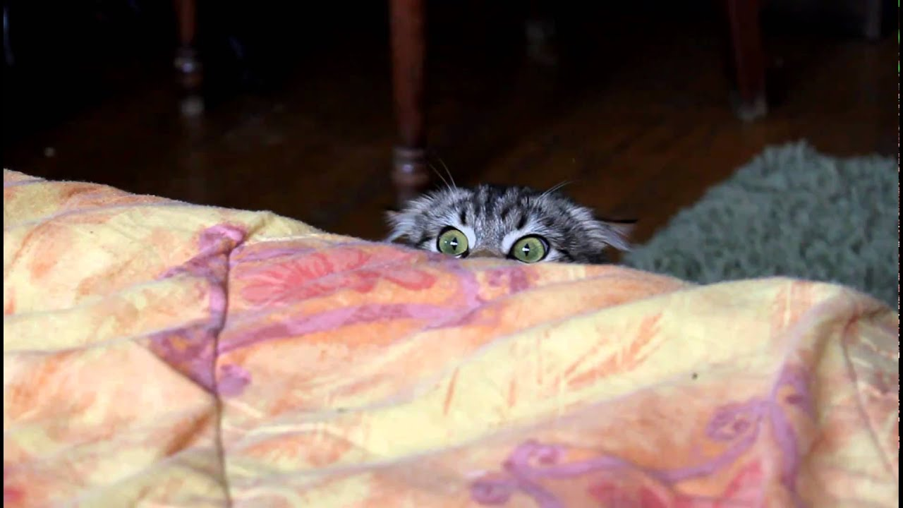 How To Get A Cat Out From Under Bed