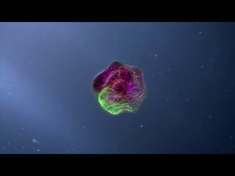 Flow Cytometry Animation