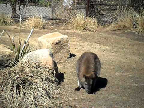 Colombia Zoo: Wallaby Exhibit (February 2011)