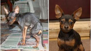 Спасение животных до и после
