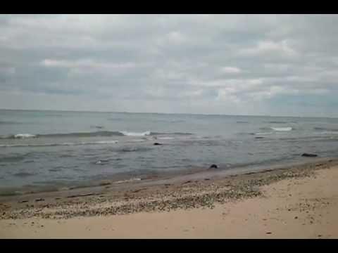 Lake Michigan At Douglas Beach
