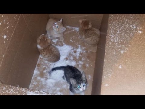 Thumbnail: Four Kittens Left Outside In Cardboard Box During A Snowstorm Saved By Stranger